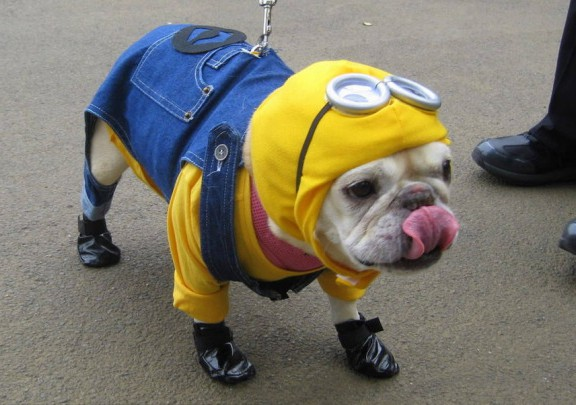dogs in minion clothes hahaha