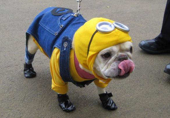 dogminion